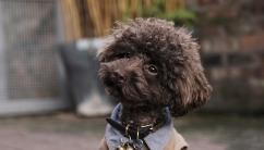 the-poodle-gang-369918-unsplash