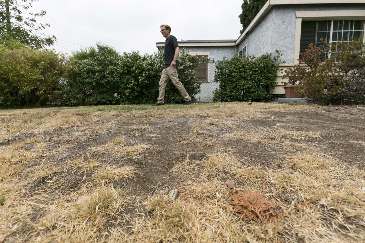 Greener Grass: Los Angeles Man Learns To Accept Balding Yard